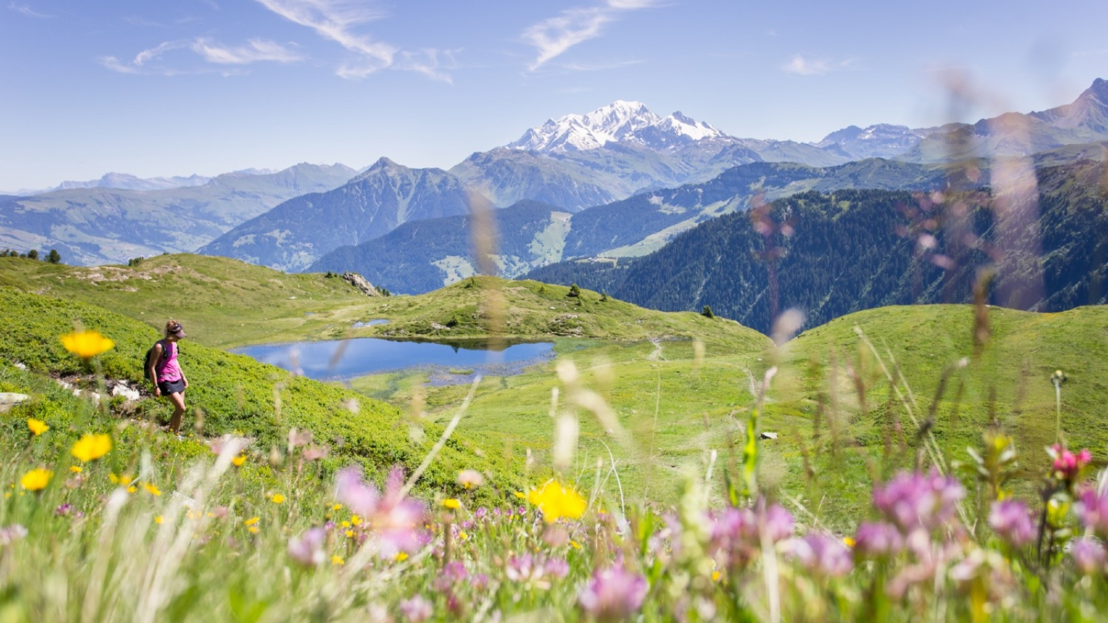 Randonnée en alpage au bord d'un lac entouré de fleurs de montagne