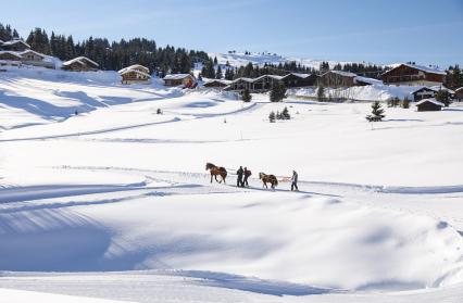 Ski tracté par un cheval
