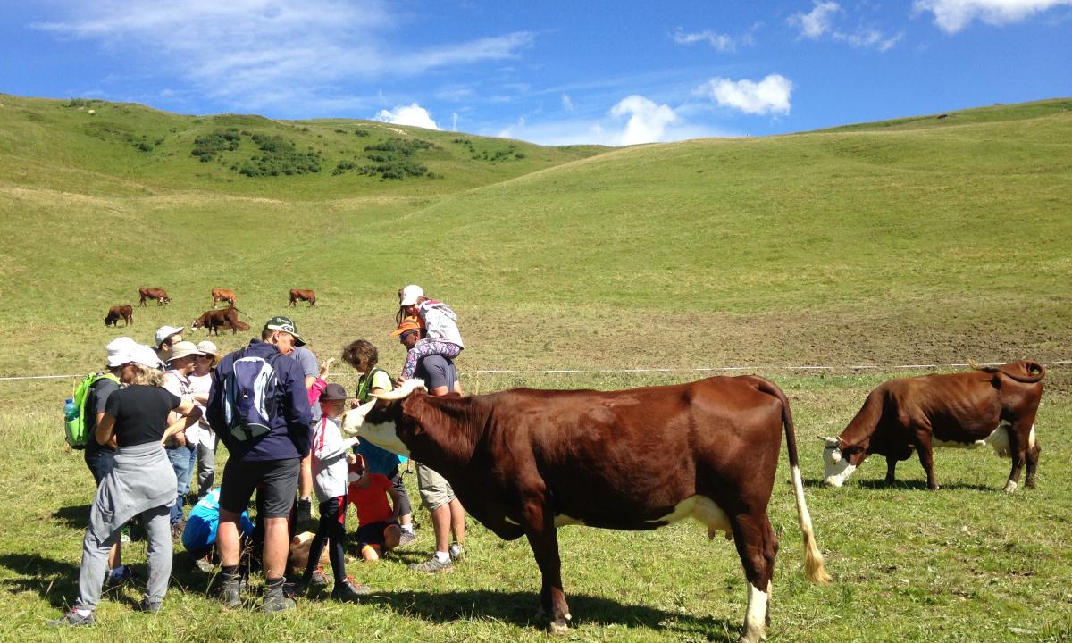 Visite à l'alpage du col du Joly