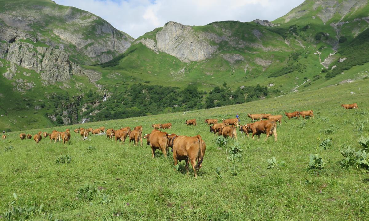 Alpage de La Gittaz