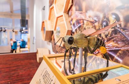 Maison de l'abeille