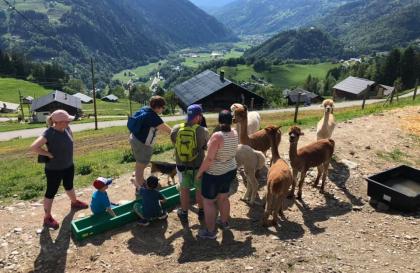 Visite de l'élevage d'alpagas