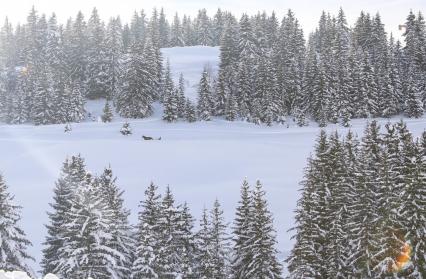 Balade en ski joëring