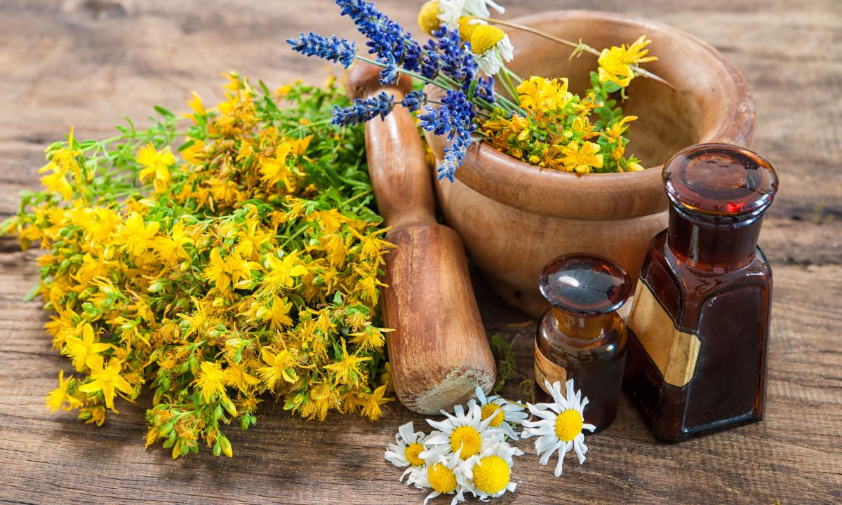 Rando plantes sauvages, comestibles et médicinales