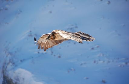 les oiseaux de montagne
